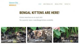 Cattery Website