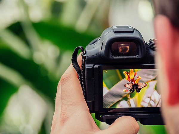 Website friendly image of a camera taking photo of a butterfly